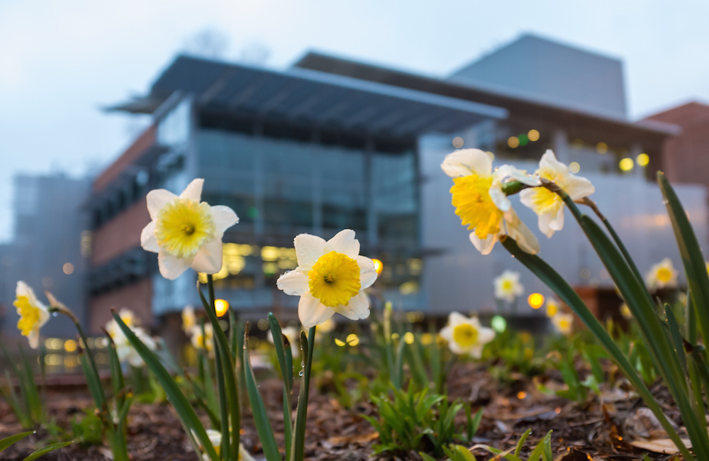 Yellow flowers outside the Clough building.